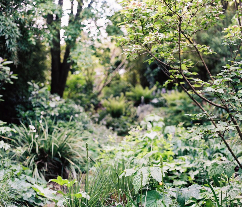 Formal and wild garden, divided by clipped hedging